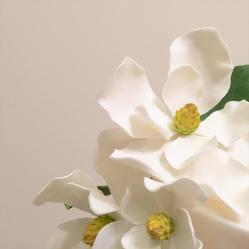 Sugar Magnolias 2